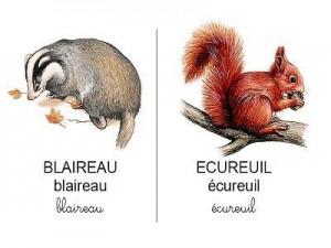 Vocabulaire-les-animaux-de-la-forêt-300x225